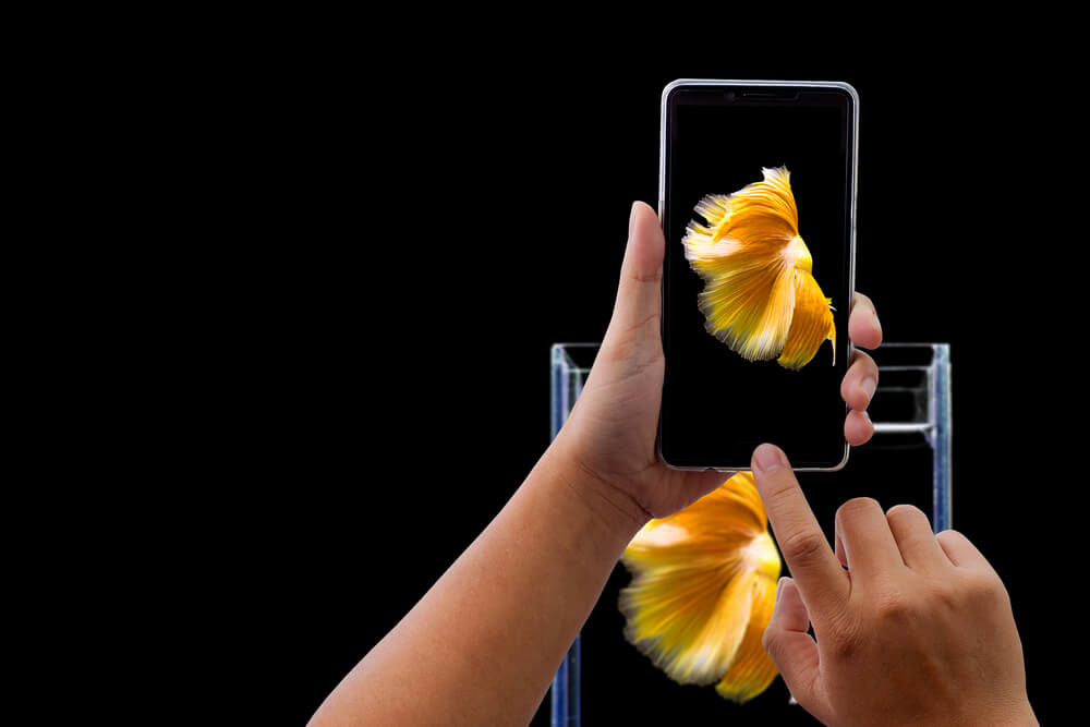 iPhone taking photo of a goldfish. - 3d pictures iPhone