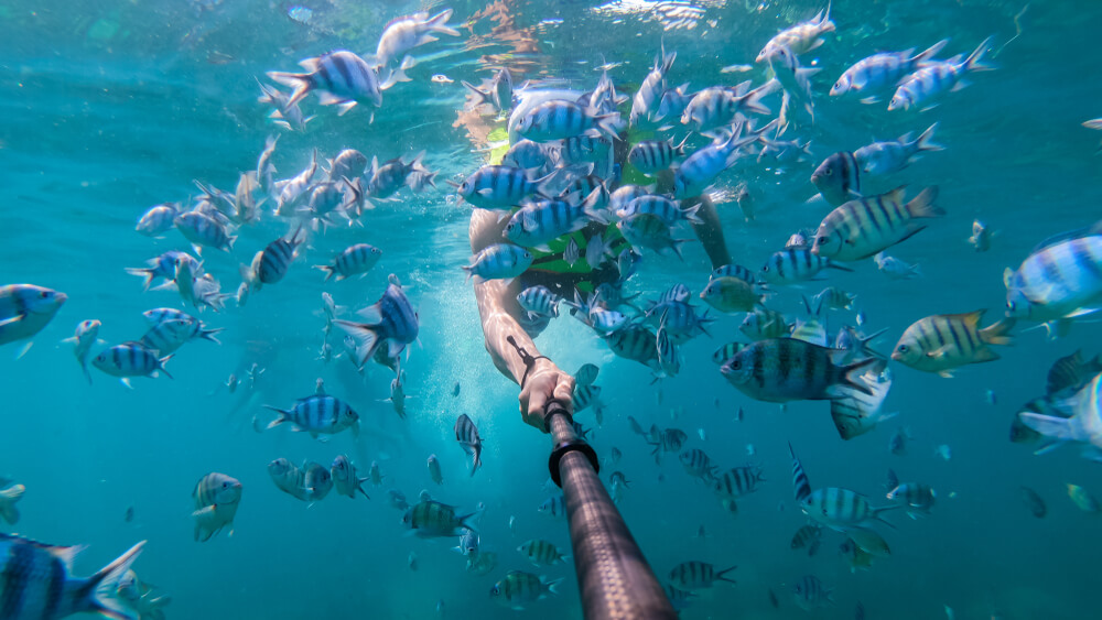 diver taking a selfie with a school of fish using a selfie-stick and iPhone - underwater pictures on iPhone