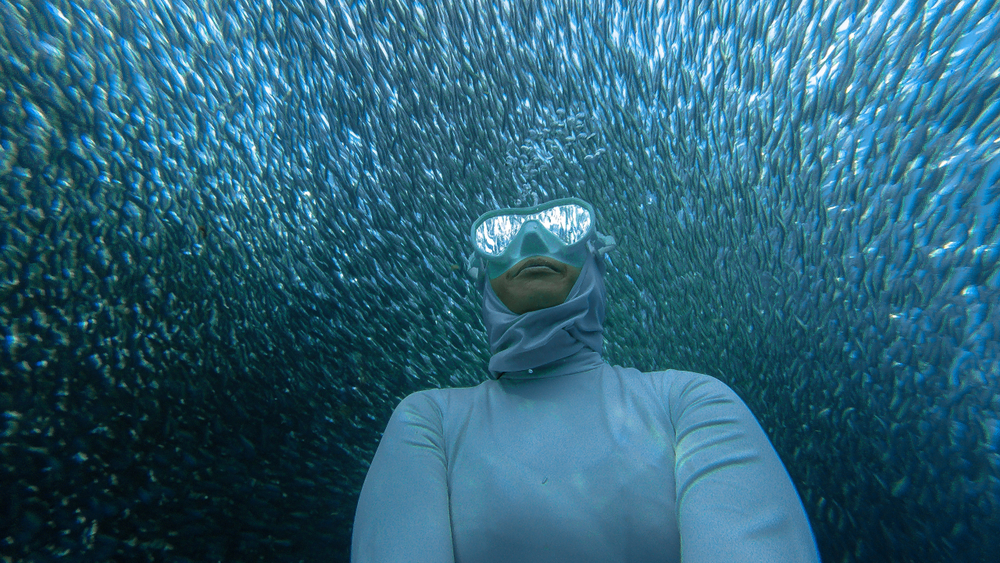 diver takes a selfie with a school of fish. - underwater pictures on iPhone
