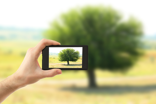 Hand taking photo of tree in field by smartphone .