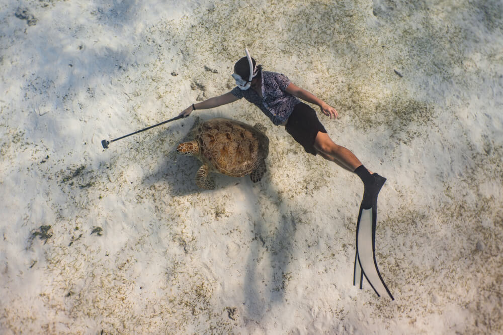 Top-view pic of a turtle and a diver