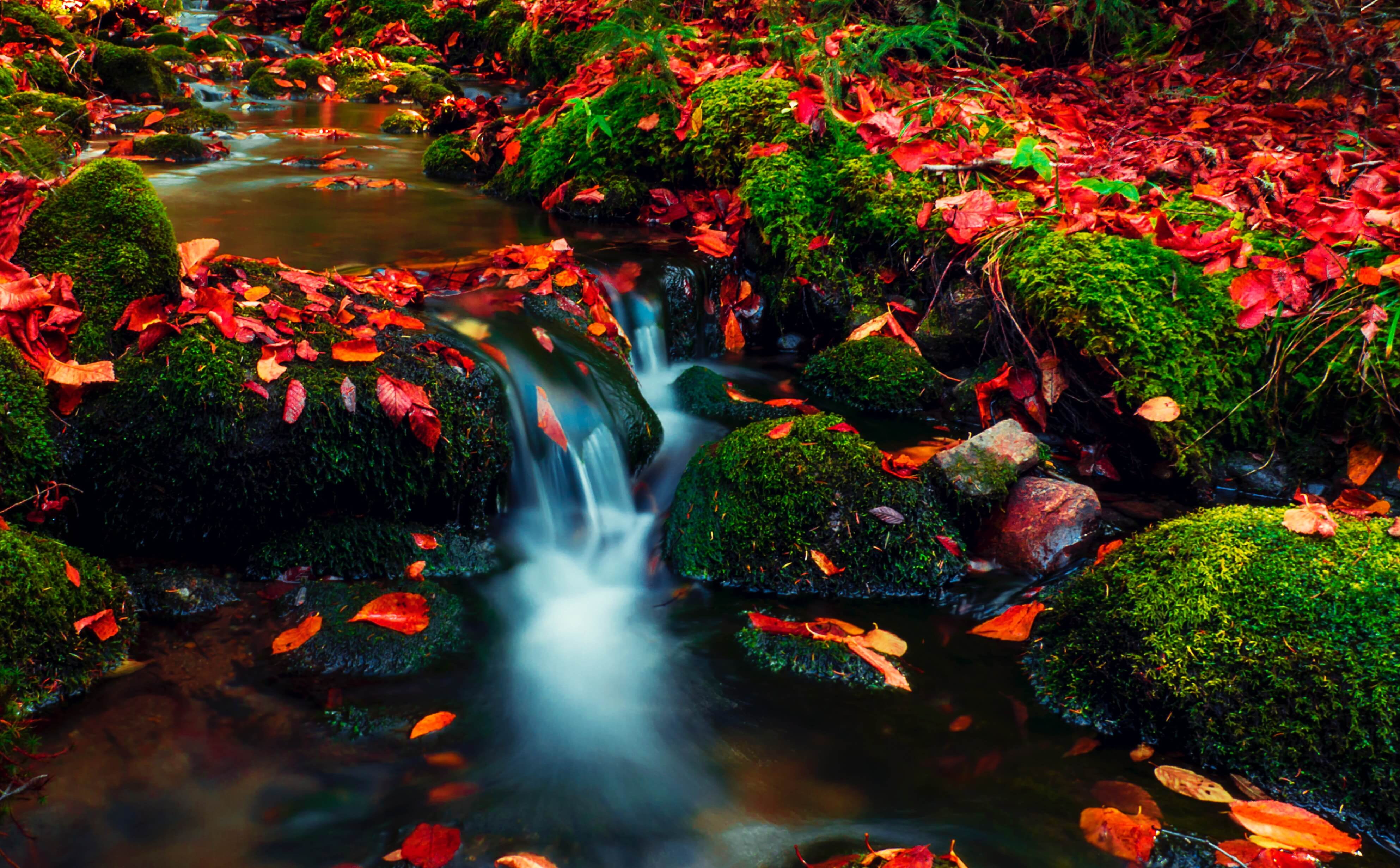moving water in stream with mossy rocks and red leaves