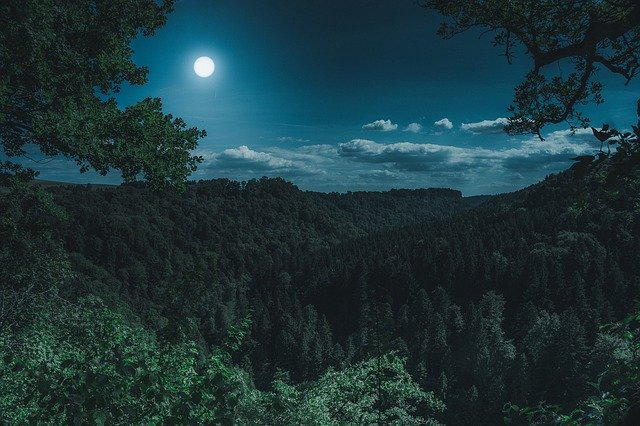 Nature, forest, and moon landscape at night.