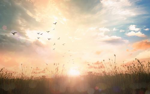 Silhouette birds flying on meadow autumn sunrise landscape background.