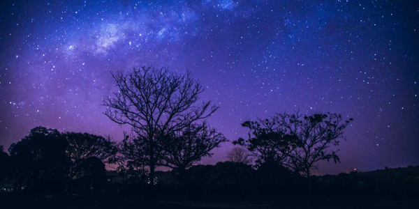 Galaxy landscape with pink and blue light. Long exposure night photo with trees un the dark