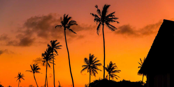 black silhouettes of tall African palm trees against a bright orange-red sunset sky
