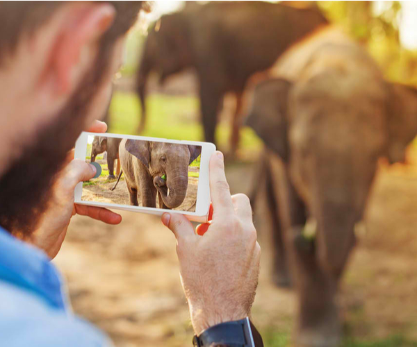 talented man photographing baby elephant with his mobile phone camera in Chitwan national park, Nepal
