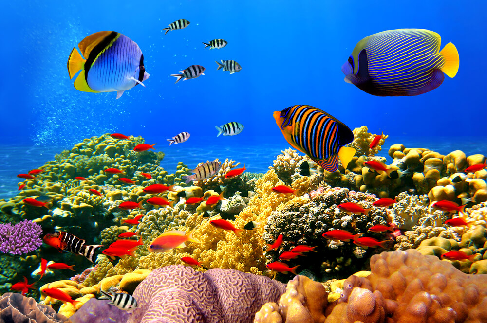 colorful coral reef and fish underwater - underwater photo with iPhone