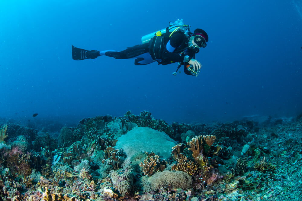 diver taking photo of coral reefs