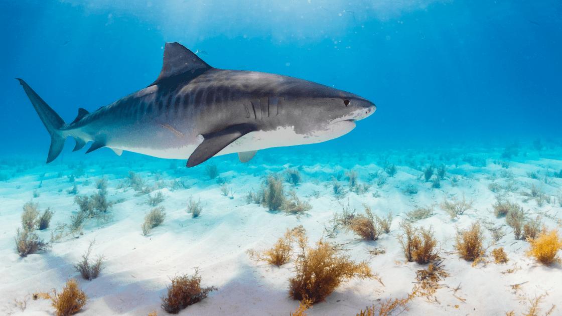 Shark underwater - iPhone camera burst mode