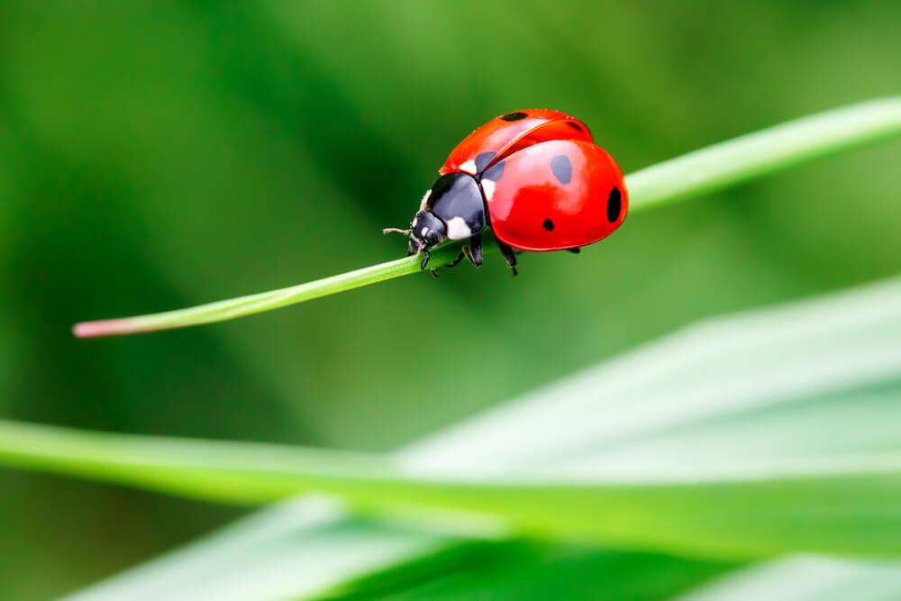 macro shot of lady bug