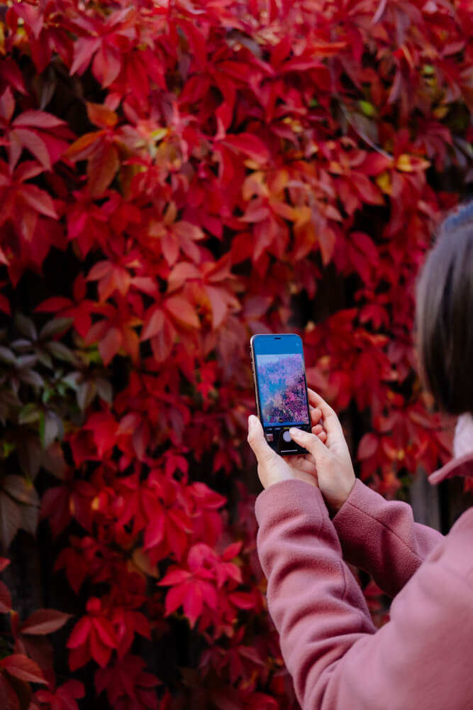 girl taking a pic of autumn leaves on iPhone - auto refocusing on iPhone