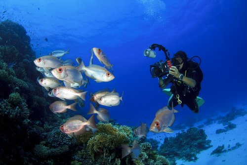 DSLR-Cameras-for-Underwater-Photography